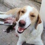 Abandonné dans une poubelle, ce chaton a été ramené à la vie par une chienne errante (Vidéo)
