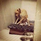La chienne la plus triste du monde, menacée d'euthanasie imminente
