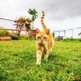 Savez-vous où se trouve le paradis des chats?