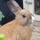 Deux lapins sont abandonnés juste après leur adoption : ce que découvre l'association est révoltant