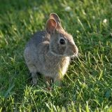 """Ces lapins """"viennent de réécrire les livres d'histoire"""" !"""