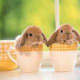 Un café aux lapins... pour japonais stressés !