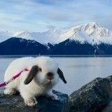 Elle fait de la randonnée… avec son lapin!