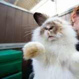 Jetés d'une voiture en marche, ces lapins étaient en piteux état, aujourd'hui ils sont méconnaissables