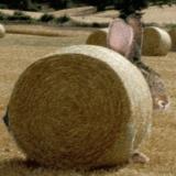 Un lapin de près de 2 mètres aperçu dans le Val d'Oise. Les habitants se lancent à sa recherche