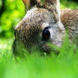 Un lapin se fait hypnotiser !