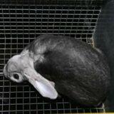 Une nouvelle enquête choc de L214 révèle la souffrance des lapins utilisés pour leur fourrure