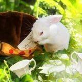 Des labos au Pays des Merveilles : les magnifiques photos d'animaux enfin libres