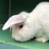 Le refuge met en ligne une annonce pour un lapin « licorne » et tout le monde est sous le charme