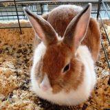 Un lapin sauve la vie d'une petite fille