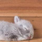 Il recycle des masques chirurgicaux en les transformant en mini hamacs pour ses lapins ! (Vidéo)
