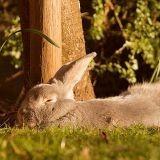 Comment protéger un rongeur, un furet ou un lapin de la chaleur ?