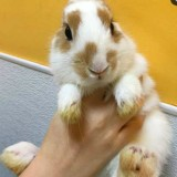 Elle prend dans ses bras un lapin abandonné et a une grosse surprise en le soulevant