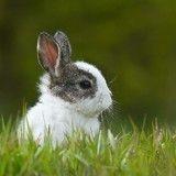 Pour lutter contre la famine, le gouvernement vénézuélien encourage à manger des lapins