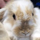Un lapin volé retrouvé pris au piège d'une boîte aux lettres