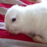 Ce lapin est né sans oreilles, mais sa maîtresse a eu la plus belle des idées