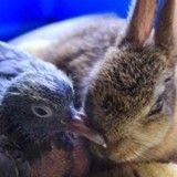 Quand un lapereau orphelin se lie d'amitié avec un oisillon (Vidéo du jour)