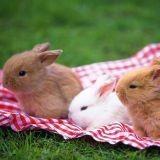 Adopter un lapin : bonne ou mauvaise idée ?
