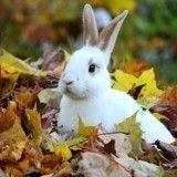 10 lapins absolument adorables célèbrent l'arrivée de l'automne