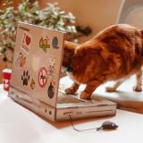 Et l'homme inventa... l'ordinateur portable pour chat !