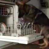 En véritable fée du logis, ce chien s'occupe de la vaisselle sale comme personne ! (Vidéo du jour)