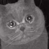 Elle allume sa caméra pour surveiller son chat : ce qu'elle découvre émeut des millions de personnes