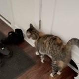 Son chat a un comportement étrange : il l'entraîne au sous-sol et elle a un choc en regardant par la fenêtre (vidéo)