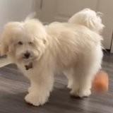 Elle emmène son chien chez le toiletteur : quelques heures plus tard, elle a la peur de sa vie (vidéo)
