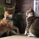 Le chien embête le chat : quelques secondes plus tard, il se produit un événement que personne n'avait vu venir (vidéo)