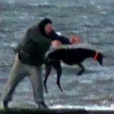 Un homme balance des Lévriers dans la mer, mais n'avait pas remarqué un détail (Vidéo)