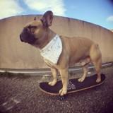 Ce chien a été élu meilleur skateur du monde ! (Vidéo)