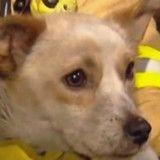 Ils viennent secourir un chien d'un incendie, quand ils découvrent ce qu'il cache, ils sont sans voix