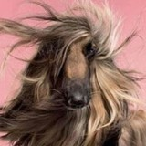 « Qui se ressemble s'assemble ! » : la preuve avec ces photos de chiens qui ressemblent à leur maître