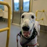 """Ce chien avec des dents """"humaines"""" aide sa maman à se faire des amis partout où elle va"""