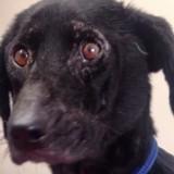 """Il regarde sa chienne et décide qu'elle est trop """"moche"""" pour mériter un toit : il l'abandonne sans eau ni nourriture (vidéo)"""