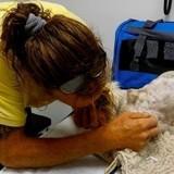 Les bouleversantes retrouvailles entre un maître et son chat de 20 ans sourd et aveugle disparu pendant 2 mois