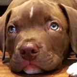 Il dépense 600 dollars pour acheter un chien sur Internet : quelques heures après, il prend une cruelle décision…