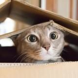 Le comportement du chat : les réponses d'un vétérinaire comportementaliste