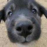 Le comportement du chien : les réponses d'un vétérinaire comportementaliste