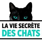 La vie secrète des chats sur TF1 : faites de votre matou une star en participant au casting de la saison 3 !