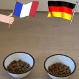 Euro 2021 : un chiot prédit le résultat du match France vs Allemagne du 15 juin !