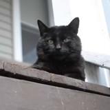 Il trouve son chat mort au milieu de la route, le lendemain il entend un miaulement et pousse un cri