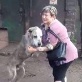 Elle retrouve son chien volé il y a 2 ans, les retrouvailles sont déchirantes (Vidéo)