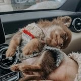 Elle veut sortir de la voiture quand son chien fait quelque chose qui la fait mourir de rire