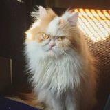 Internet a trouvé son nouveau Grumpy Cat