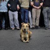 RIP Loukanikos, célèbre chien errant et héros des manifestations d'Athènes