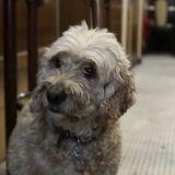 Tout un bar mobilisé pour aider la chienne Loulou après la mort de sa maîtresse