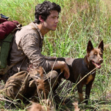 Love and Monsters : un Berger Australien Kelpie vedette d'un film diffusé sur Netflix