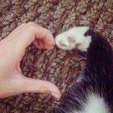 Les plus belles histoires d'amitié entre des chats et des humains