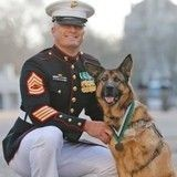 Lucca, chienne militaire handicapée et médaillée pour ses services